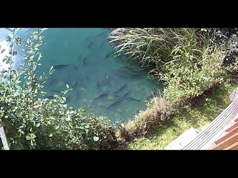 Kingfisher Lodge  Fish View