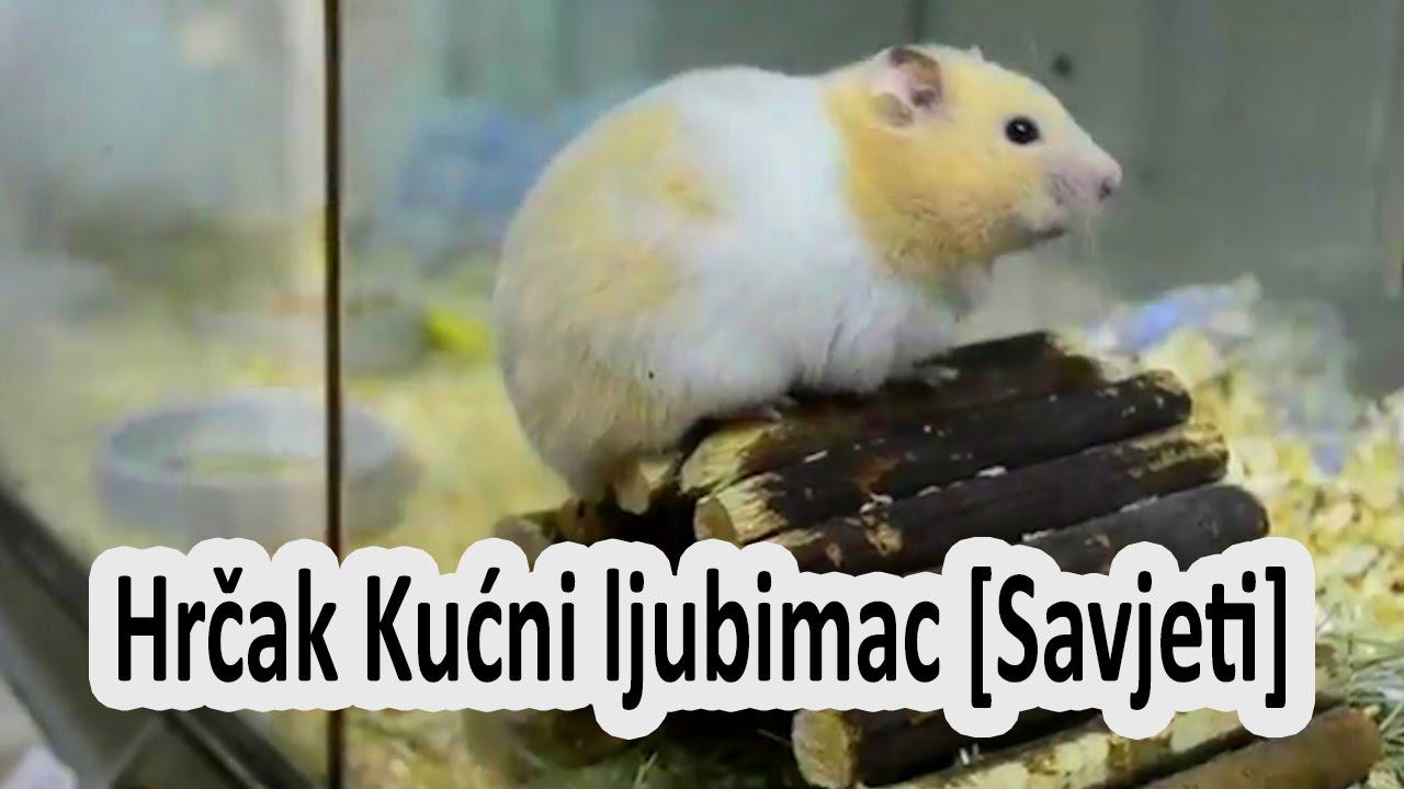 Video za hrčke
