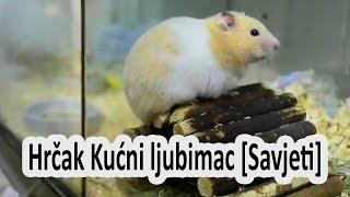 Hrcak Kucni ljubimac [Savjeti] - Hamster