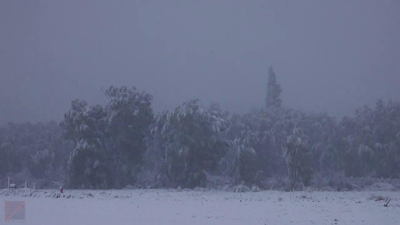 Colorado Snowfall in 4k Relaxing and Calm