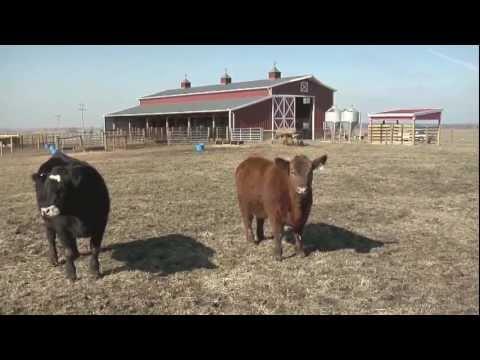 Bill's Livestock Building