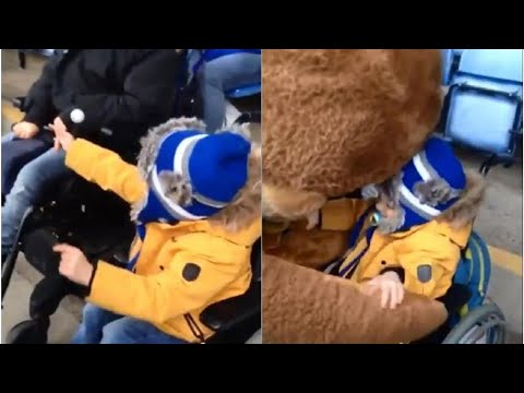 video:-heartwarmimg-moment-sheffield-wednesday-mascots-make-a-disabled-young-fan's-day