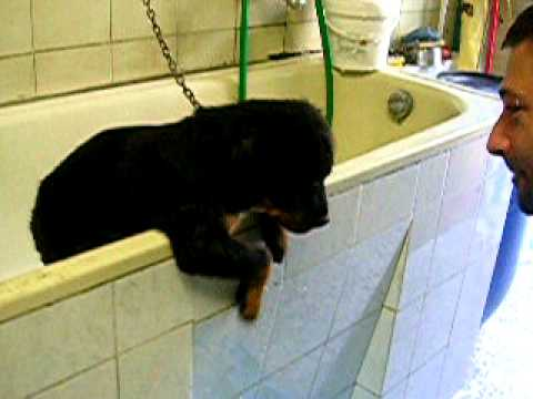 Vasca Da Toelettatura Cani : Vasca lavaggio cani animali in vendita a taranto