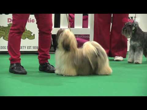 Birmingham National 2016 Dog Show - Utility Puppy group