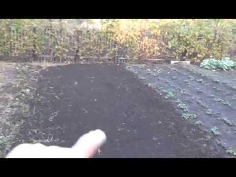 Готовим грядку для посадки озимого чеснока