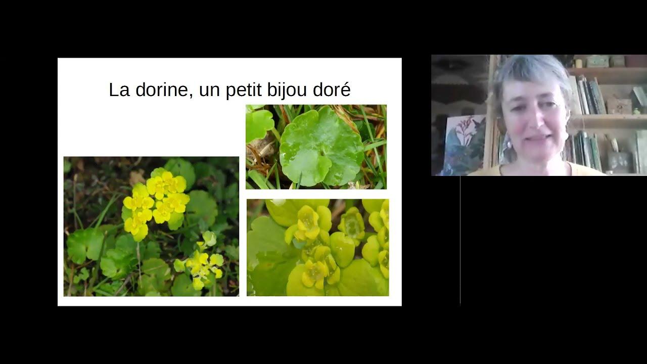Webconférence 3/3 - Les fleurs vernales près des sources