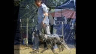 Schnauzer Club Of Nsw 68th Championship Show At Erskine Park 9 April 2006