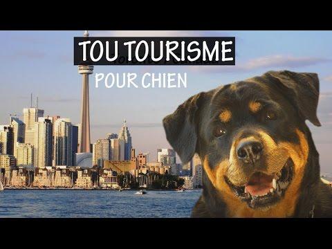 TOU TOURISME…pour chien – 10 villes mieux adaptées aux chiens – Partout avec mon chien