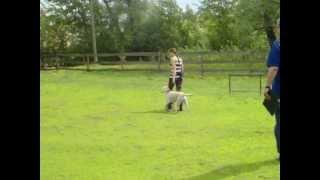 Сдача норматива BH (собака-компаньон) 25.05.13