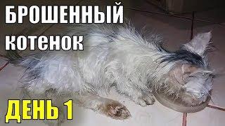 Брошенный котенок  День первый Спасение бездомного котенка