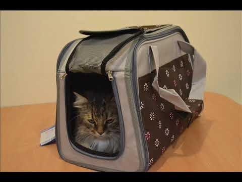Рюкзак переноска кенгуру для кошек и собак Лайт - YouTube