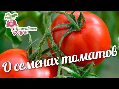 Семена томата сортов «ДЕДУШКИН F1» и «СТО ПУДОВ» #urozhainye_gryadki