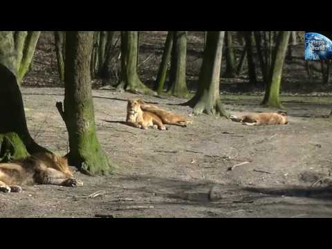 Burgers Zoo Niederlande/Holland