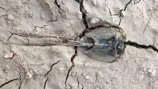 Aquatic desert organisms hidden in plain sight