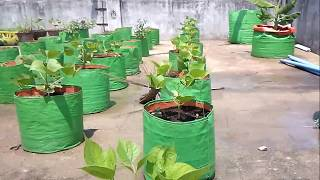 maadi thottam (terrace garden) Oct 2014 organic phase II - Kanchipuram