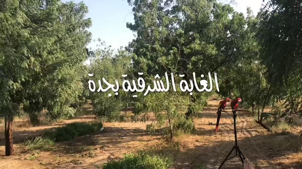 Forest Blog: موقع الغابة الشرقية في جدة