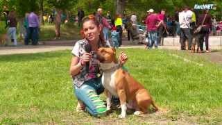Лучшие друзья: необычные собаки на выставке в Керчи
