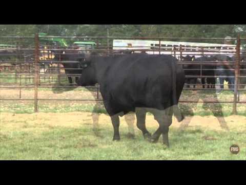 Seven T Farms Tag 308