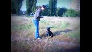 Дрессировка щенка Кане корсо. Гектор, 2,5 мес, сын Аякса