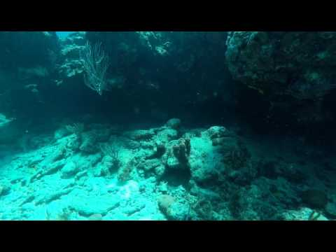 Diving off Cow and Calf Rocks in St. Thomas, U.S. Virgin Islands