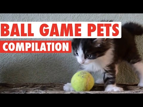 Incredible Ball Game Pets Compilation