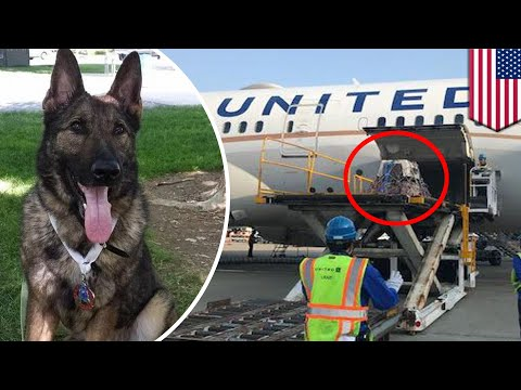 Pets on planes: United Airlines mistakenly flies Kansas-bound family dog to Japan - TomoNews