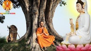 Ở Đời Có Nên Tin Vào Số Phận Không ? Nghe Phật Dạy Về Cách Thay Đổi Số Phận Để Được Giàu Sang
