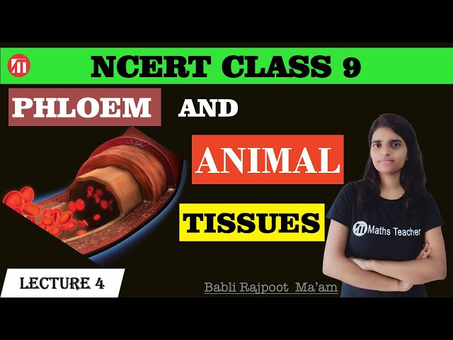 Tissues (Lecture 4) | Animal Tissue | Complex Permanent Tissue | Phloem & Its elements | Class 9