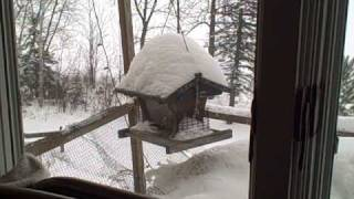 The Chickadee Song - by George Shears - 12-19-08