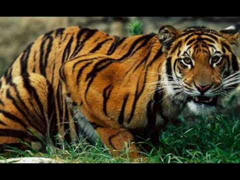 Carnivores and Herbivores of the rainforest - YouTube