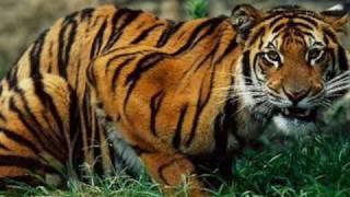 Protein Shakes - Carnivores, Herbivores and Omnivores