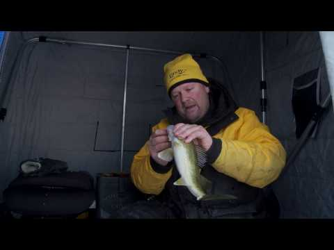 Small Spoon Walleye's Through The Ice