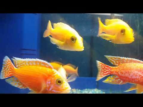 Kangen Fish Aquatics