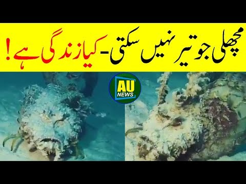 Fish That Cannot Swim || Most Amazing Creation In The World || Arab Urdu News