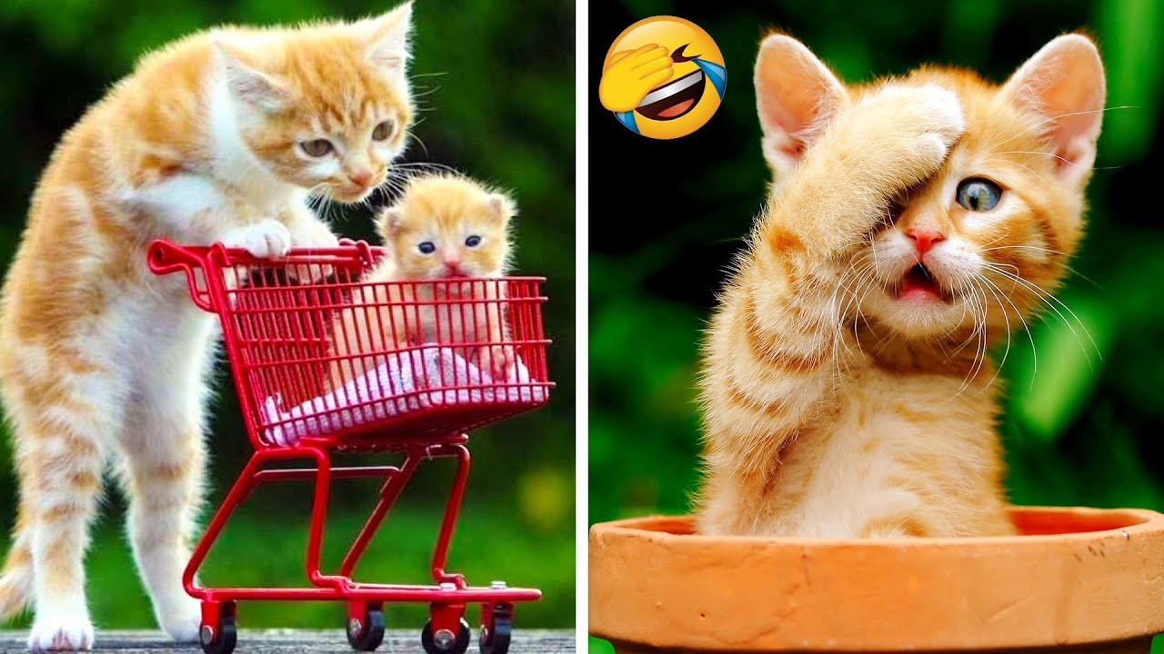 Download Funny Cats And Dogs That Will Make You Laugh 😂 - Funniest Animals Compilation #5