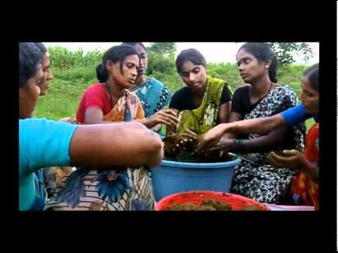 Preparation of Bio-fertilizer (Ghanajeevamrutam) - Telugu - SERP - Andhra Pradesh