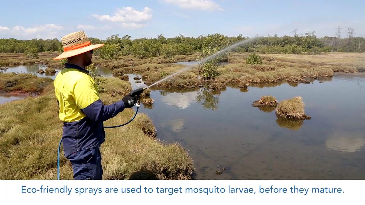 Mosquitoes | Brisbane City Council