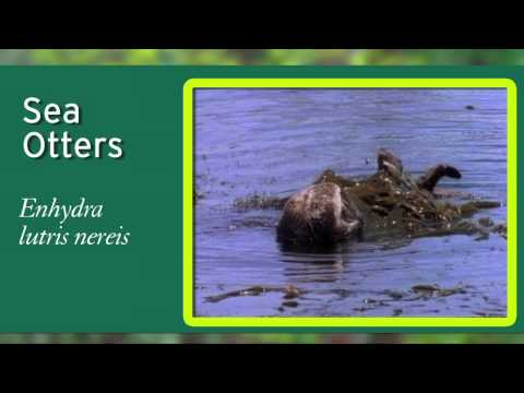 NWF's Guide to America's Best  Wildlife Watching