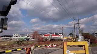 JR東日本 キヤE195系  甲種輸送②  谷川踏切通過
