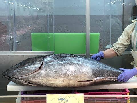 日本 黑鮪魚解體秀~(マグロ解体ショー )