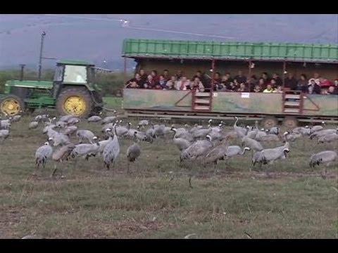 Festival Lembah Burung Hula