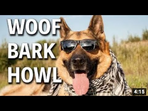Woof Bark Howl | Young Jeffrey's Song Of The Week