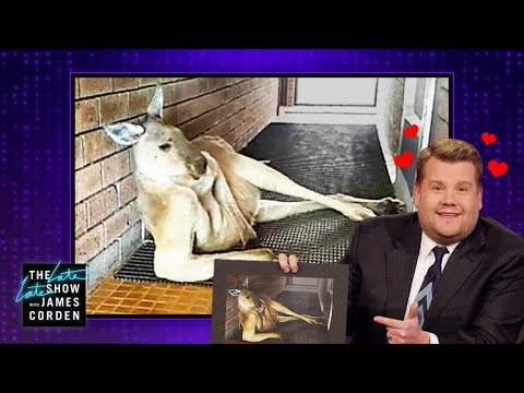 Download Youtube: Kangaroo Bae Has James Corden Hot & Bothered