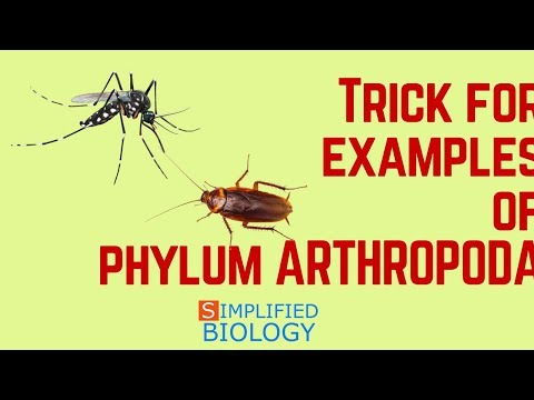 TRICK FOR EXAMPLES OF ARTHROPODA & CHARACTERISTICS for NEET, AIIMS, AIPMT, JIPMER, PREMED