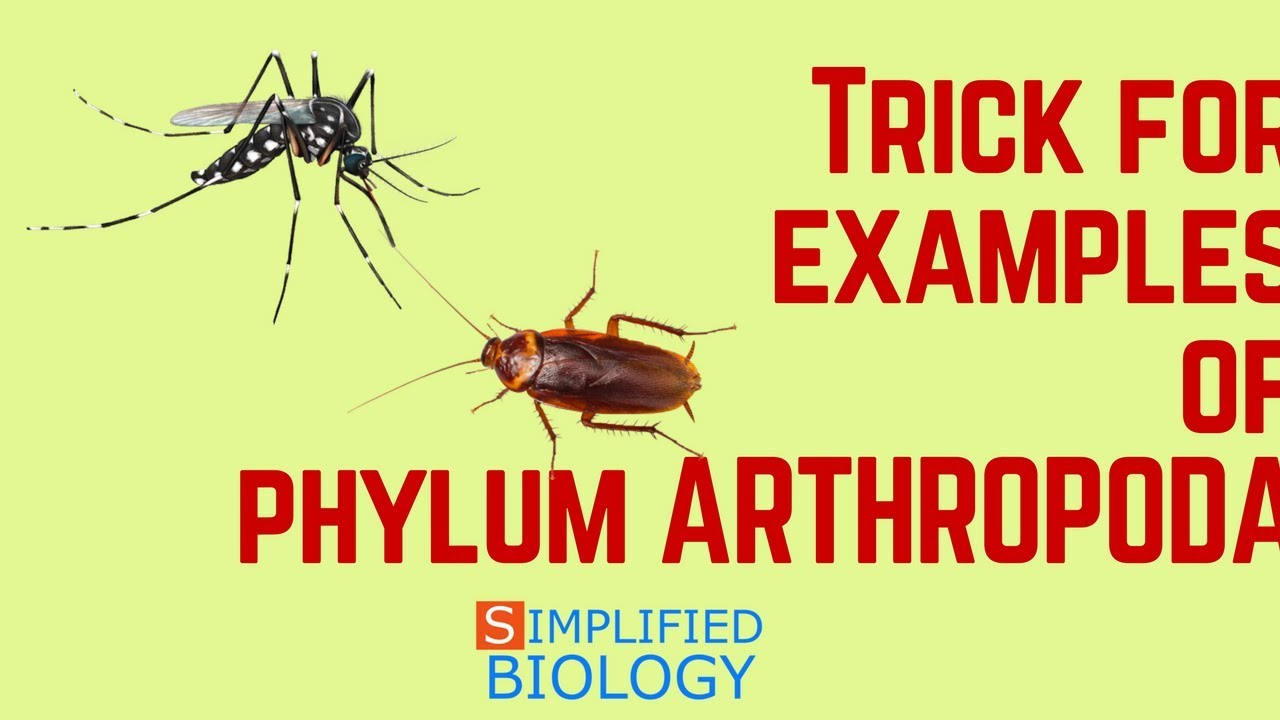 Trick For Examples Of Arthropoda Characteristics For Neet Aiims
