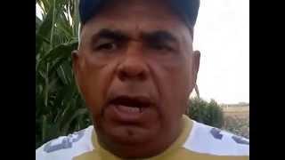 Cosechando en mi Municipio Carlos Arvelo, Edo.Carabobo, Venezuela