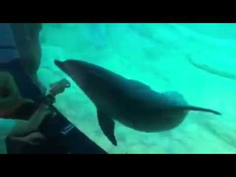 Dolphin Dances to the Music