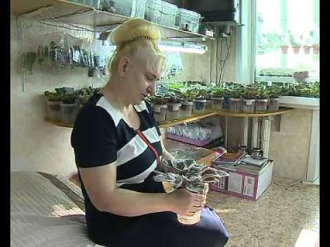 видео: Жительница Артема создала самую большую коллекцию фиалок в Приморье