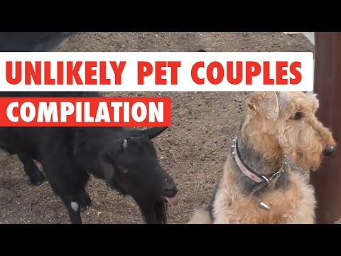Unlikely Pet Couples Funny Video Compilation 2017