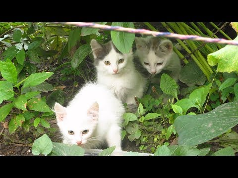Three kittens with cats meow on the street